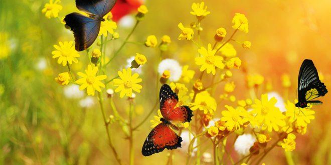 Die Transformation der Raupe zum Schmetterling ist ein einsamer Prozess.